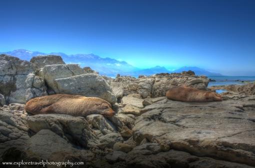 Seals in Kaikoura, New Zealand