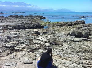 Me in New Zealand taking photos of seals and the lovely landscape