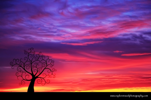 Sunset Silhouette and Lone Tree