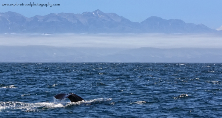 Whale Watching in New Zealand