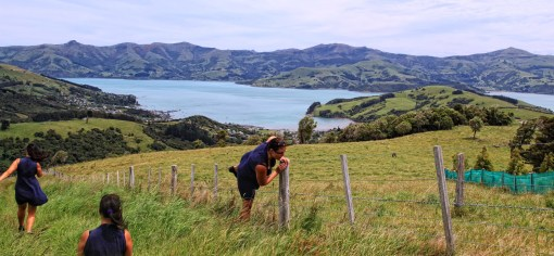 Multiplicity in Banks Peninsula